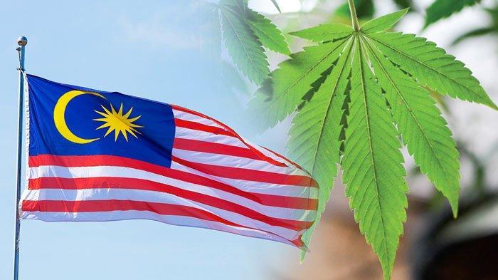 Ganja Dikabarkan akan Legal di Malaysia untuk Keperluan Medis, Pasca Kasus Hukuman Mati dan Petisi