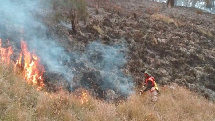 Kebakaran Hutan di Gunung Semeru Terus Meluas, Kobaran Api Sudah Tembus 60 Hektar dan Capai Ranupani