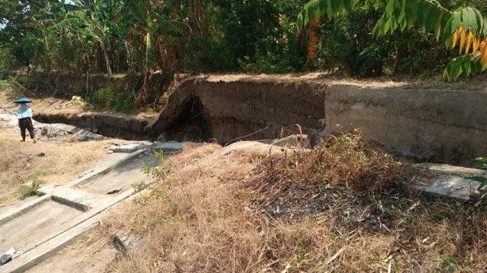 Bantaran Sungai Bengawan Solo Longsor, WargaDesa Padangbandung Gresik Waswas Mendekati Musim Hujan