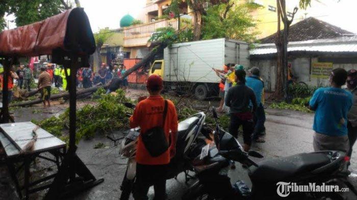 Pohon Sono Berdiameter 40 cm Tumbang di Jalan Niaga Mojokerto, Menimpa Dua Mobil hingga Penyok