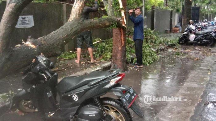 Waspada Lokasi Pohon Tumbang di Kota Malang Akibat Hujan Deras dan Angin Kencang Minggu Sore