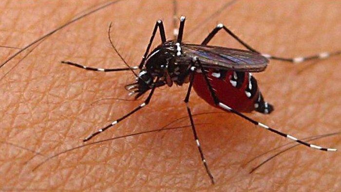 Kasus Demam Berdarah Dengue di Jatim Tembus 5.733 Kasus dengan 52 Kematian, Ini Langkah Dinkes Jatim