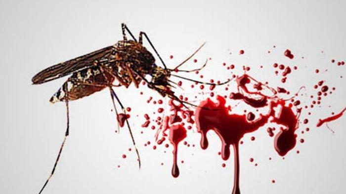 Aneh, Musim Kemarau Kasus Penyakit Demam Berdarah Dengue (DBD) di Tulungagung Malah Cukup Banyak