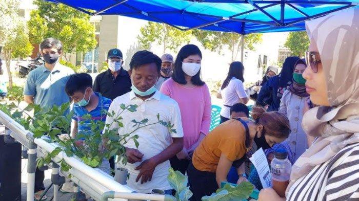 Sukses Kembangkan Tanaman Hidroponik, Bawafie Farm Diundang Beri Pelatihan Bertanamdi Surabaya