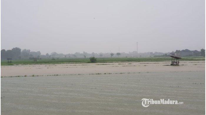 Padi petani terendam banjir di wilayah Kecamatan Batuan Sumenep, Rabu (6/1/2021)