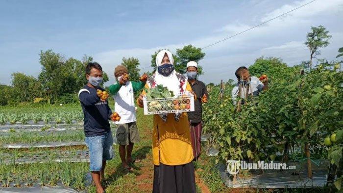 Dulu Ditanami Jagung, Lahan Demplot di Bangkalan ini Disulap Jadi Lahan Subur Tanaman Sayur dan Buah
