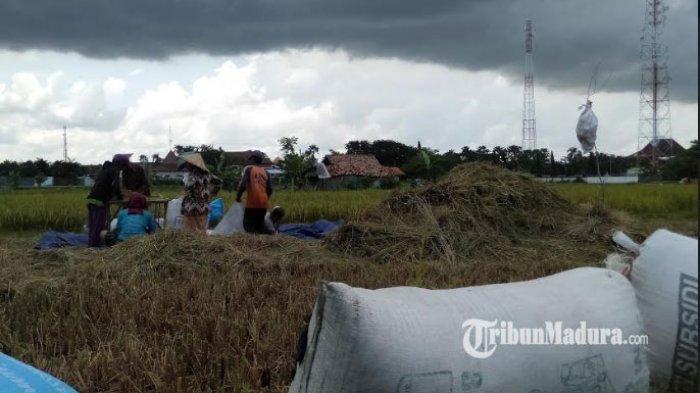 Tingkatkan Kualitas, Dinas Pertanian Kabupaten Sampang Akan Lakukan Revitalisasi Kelompok Tani
