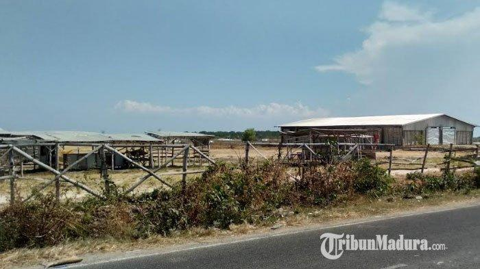 Disperdagprin Andalkan Dana Pusat untuk Pembangunan Sarana dan Prasarana Pasar Hewan Desa Aeng Sareh
