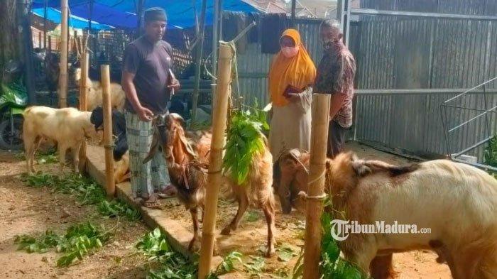 PPKM Darurat di Sumenep, Penjualan Hewan Kurban Turun hingga 50 Persen Sepekan Jelang Idul Adha