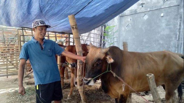 Disperta KP Sampang Madura Kontrol Realisasi Bantuan Hibah Sapi, Jumlahnya Meningkat dari Tahun 2020