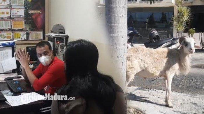 Aksi Nekat Maling Kambing di Tuban, Mengendap-Endap Hendak Curi Kambing yang Digembala Pemilik