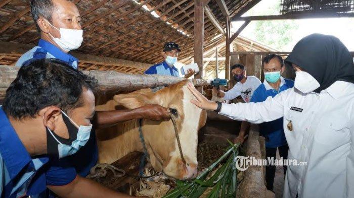 Peternak di Banyuwangi Bisa Periksakan Hewan Ternaknya secara Gratis, Begini Caranya