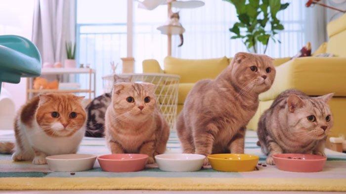 Arti Mimpi Melihat Kucing Menurut Primbon Jawa, Dipertemukan dengan Seseorang hingga Segera Menikah