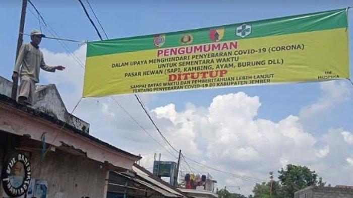 Bupati Faida Tutup Seluruh Pasar Hewan di Jember,Masih Ada Sejumlah Pedagang yang Nekat Berjualan