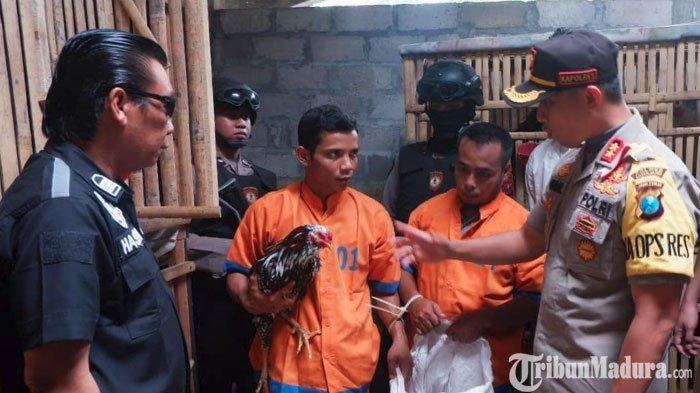 Ayam Impor Bangkok Jutaan Rupiah Dicuri 2 Pria Asal Lumajang, Seekornya Dijual hanya Rp 100 Ribu