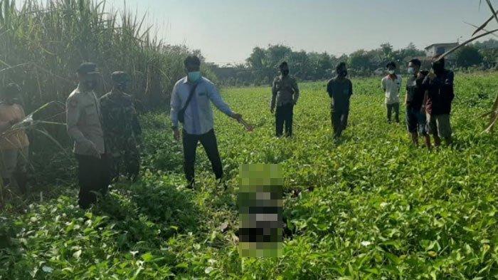 Leher dan Dadanya Menghitam, Pria ini Ditemukan Tewas Tak Lama setelah Tiba di Ladang Kangkung