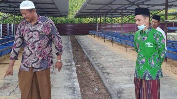 Program Pertanian Terintegrasi di Ponpes,Cukup Titip Sapi, Wali Santri Tak Perlu Bayar Pendidikan