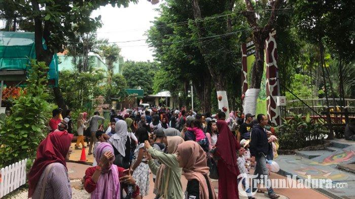 Kebun Binatang Surabaya ( KBS ) Dikepung Wisatawan saat Libur Hari Natal, Tembus27 Ribu Orang