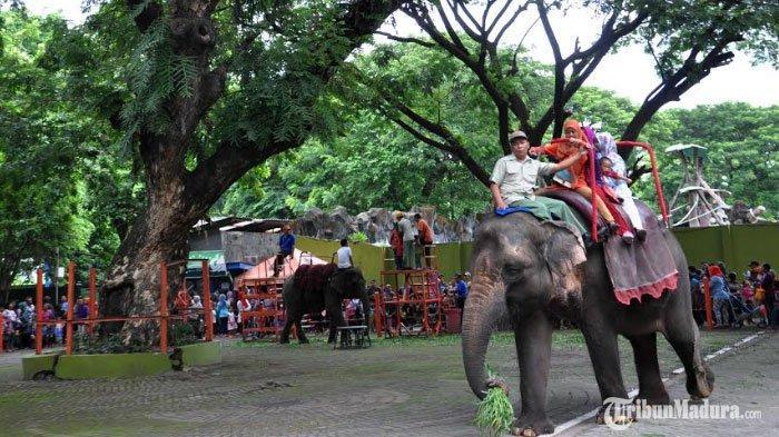 Kebun Binatang Surabaya Berpeluang Kembali Dibuka untuk Umum pada Pekan Ketiga Juni 2020 Ini