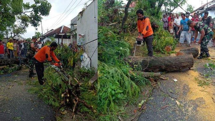 Hujan Deras Disertai Angin Kencang Robohkan Tiga Pohon di Pamekasan, Timpa Rumah dan Dapur Warga