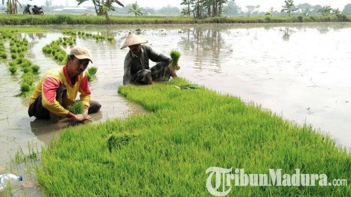 Profesi Paling Kena Dampak Akibat Virus Corona di Tiap Provinsi, Waspada untuk Petani dan Nelayan