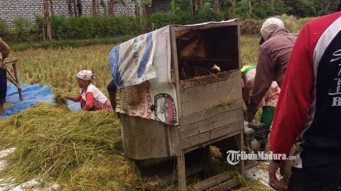 Poktan Sumber Mulyo Desa Gunung Eleh Sampang Rangkul Petani Muda, Upaya Tingkatkan Hasil Pertanian