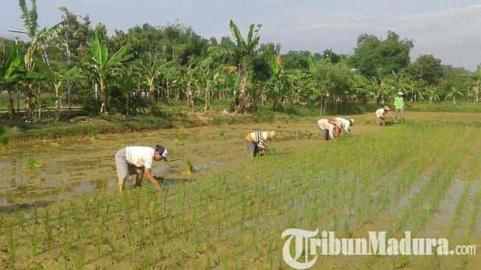 Setahun 9.597 Hektar Lahan Pertanian di Jatim Berubah Jadi Tempat Bisnis Pengusaha, Pemda Disorot