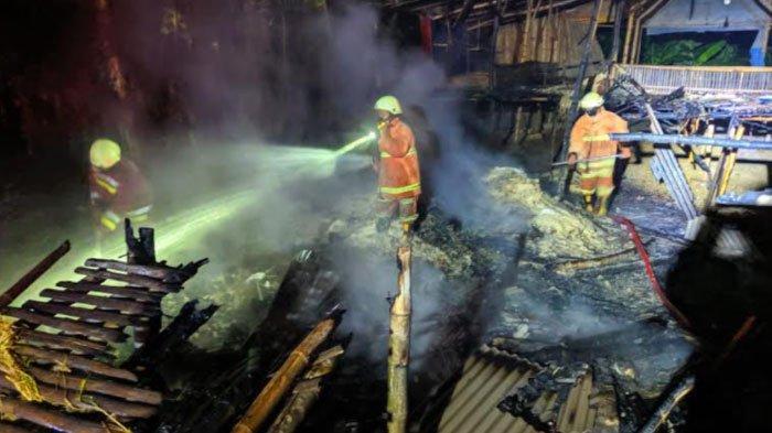 Ratusan Ekor Ternakdi Bojonegoro Mati Terpanggang, Terjebak Dalam Kandang yang Terbakar