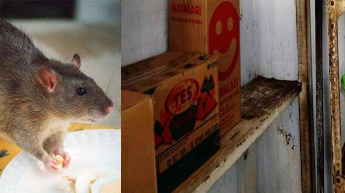 Sidak Retail Makanan, Petugas Dinkes Tulungagung Temukan Kotoran Tikus dan Produk Dimakan Tikus
