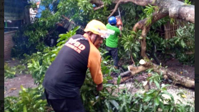 Jember Dilanda Hujan Deras Disertai Angin Kencang, Beberapa Rumah Warga Rusak dan Pohon Ambruk