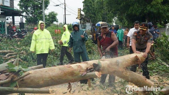 Kota Batu Masuk Masa Pancaroba, Warga Diminta Waspada Angin Kencang hingga Potensi Pohon Tumbang