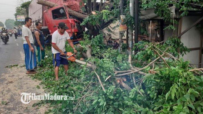 Kronologi Truk di Mojokerto, Truk Muatan Tembakau Oleng Hingga Menabrak Pohon, Begini Kondisi Sopir
