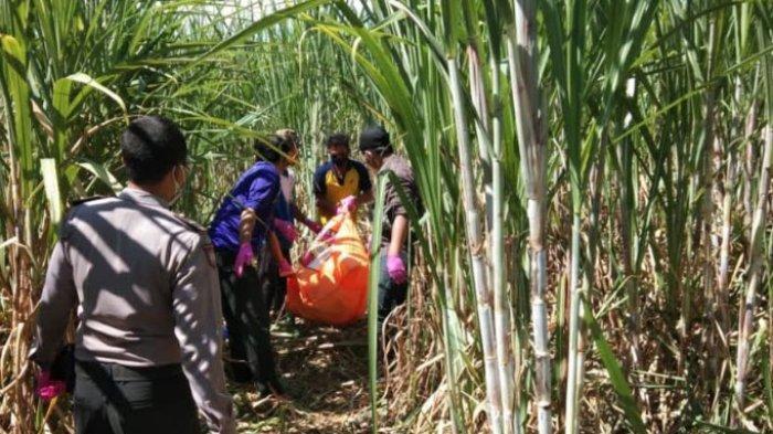 Mayat Pria Ditemukan Tergeletak di Kebun Tebu Sidoarjo, Diperkirakan Tewas Sejak Beberapa Hari Lalu