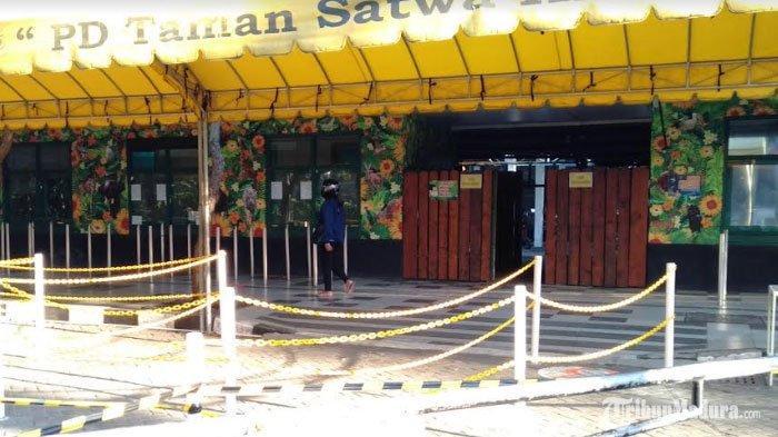 Kebun Binatang Surabaya BatasiJam Operasional dan Jumlah Pengunjung, Simak Jadwal Kunjungan ke KBS