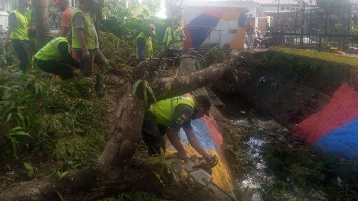 Kota Malang Diterjang Hujan dan Angin Kencang, Pohon Sengon Setinggi 5 Meter Tumbang Tutupi Selokan