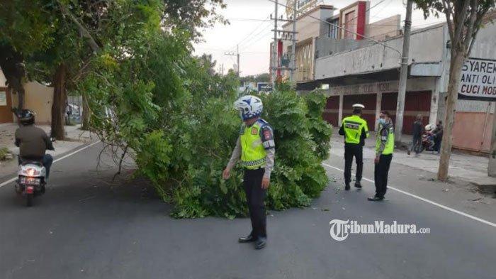 Timbulkan Kemacetan Lalu Lintas, Pohon Tumbang di Jalan Raya Kediri - Pare Nyaris Menimpa Pengendara