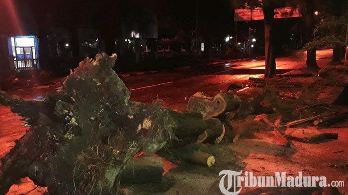 Hujan Deras Disertai Angin Kencang Landa Wilayah Gresik, 4 Pohon di Sejumlah Ruas Jalan Tumbang