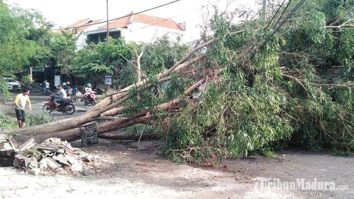 Sebanyak 77 Pohon di Surabaya Tumbang Diterjang Angin Kencang, Korban Nyawa dan Kendaraan Berjatuhan