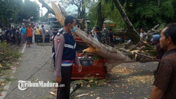 Viral di WhatsApp, Mobil Toyota Calya di Bangkalan Tertimpa Pohon Tumbang, ada yang Terluka
