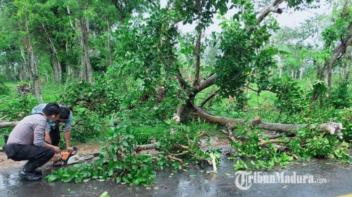 Tertimpa Pohon Tumbang Akibat Angin Kencang di Sumenep, Pengendara Motor Mengalami Luka di Kepala