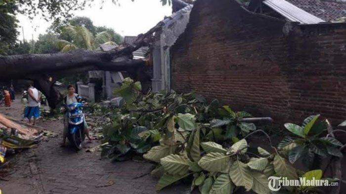 Desa Tunggalpanger Mojokerto Diguyur Hujan Lebat, Satu Rumah Warga Rusak Tertimpa Pohon Tumbang