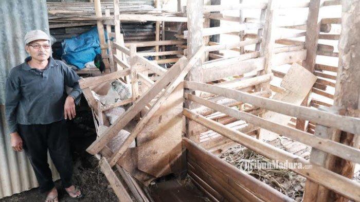 Puluhan Kambing Warga Kota Batu Hilang, Pencurian Kambing Terjadi secara Bertahap 2 Bulan Terakhir