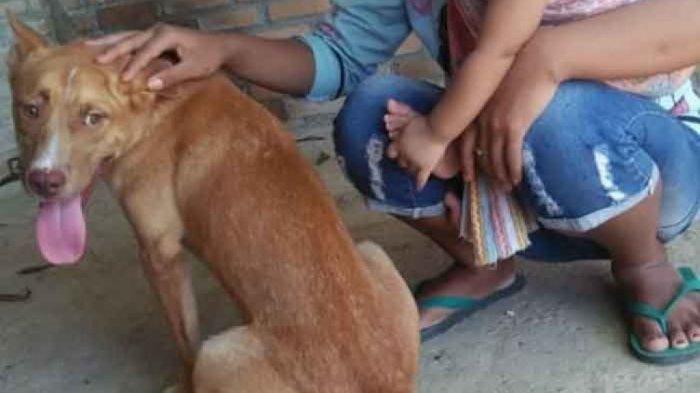 Polisi Sudah Kantongi Nama Pelaku Pembantaian 11 Anjing di Pacitan, Kesal Gegara Kambingnya Digigit