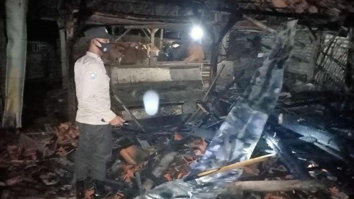 Kandang Sapi di Sampang Ludes Terbakar, Api Berasal dari Tumpukan Sampah yang Tersenggol Anak Sapi