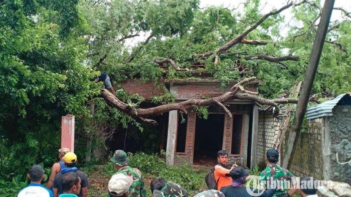 Diterjang Angin Puting Beliung, Sebuah Pohon di Gresik Tumbang Menimpa Rumah Warga