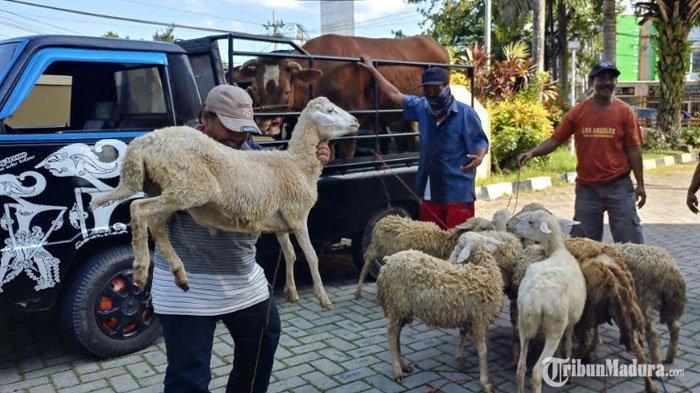 Pasar Hewan di Jember Kembali Dibuka Mulai Hari Ini, Pedagang dan Pembeli Wajib Patuhi Hal Berikut