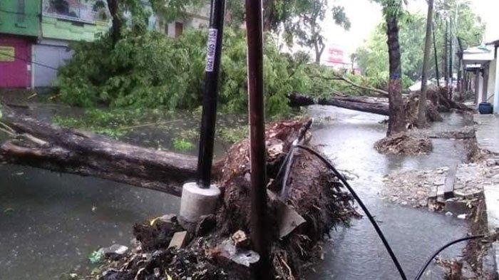 Bojonegoro Diguyur Hujan Deras Disertai Angin Kencang,SejumlahPohon Tumbang dan Bangunan Rusak