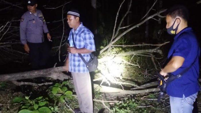 Nahas, Pria di Desa Tanen Tulungagung Tewas Tertimpa Pohon Milik Perhutani yang Ditebangnya Sendiri