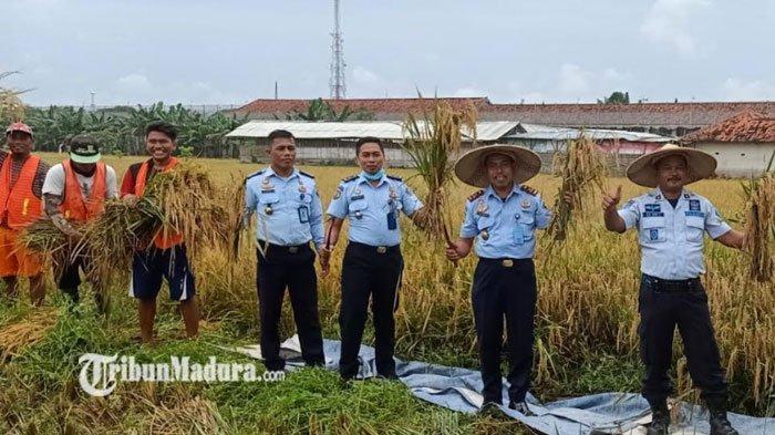 Panen Raya Padi Warga Binaan Lapas, Kepala Lapas Ikut Turun ke Sawah: Menyumbang Ketahanan Pangan