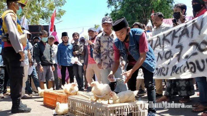 Ratusan Peternak Ayam Demo di Depan Kantor DPRD Pamekasan, Keluhkan Harga Jual Ayam Pedaging Anjlok